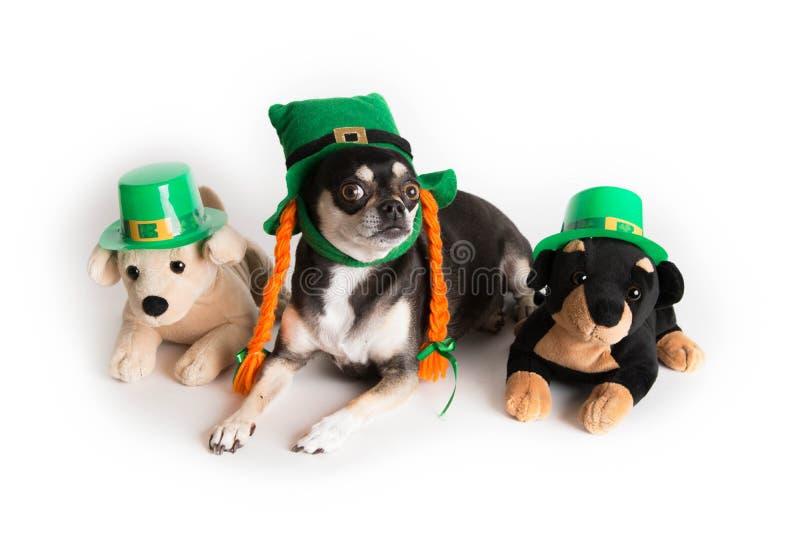 Śliczny St. Patrick dnia pies fotografia stock