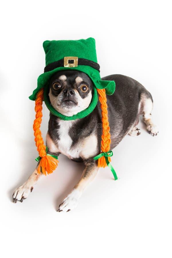 Śliczny St. Patrick dnia pies zdjęcia stock