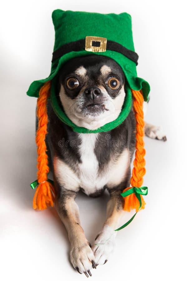 Śliczny St. Patrick dnia pies obrazy stock