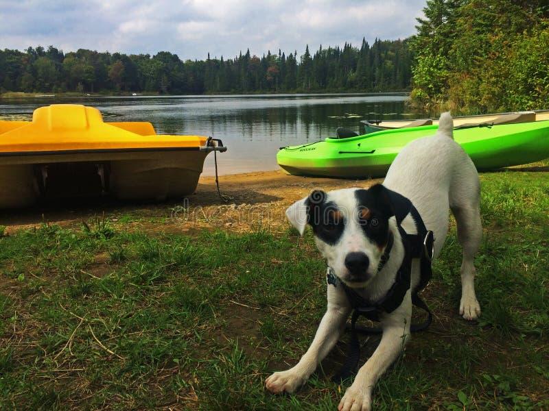 Śliczny szczeniak Przygotowywający Bawić się przy jeziorem - Psi język ciała obraz stock