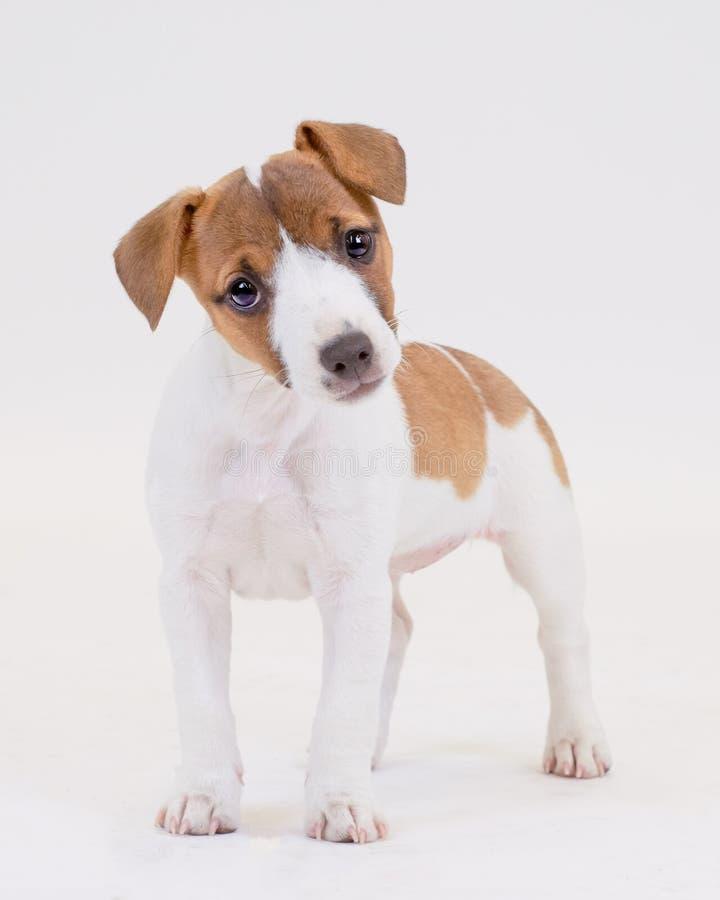 Śliczny szczeniaka pies fotografia stock