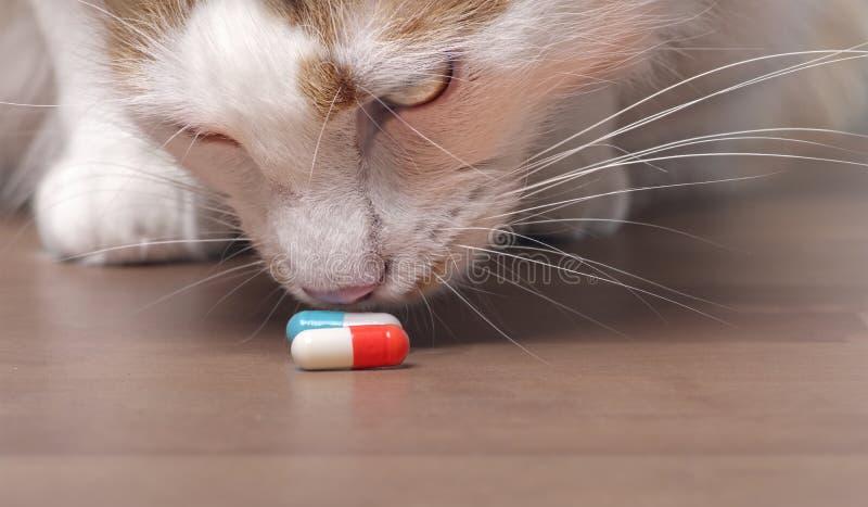 Śliczny tabby kot obwąchuje na medycyn kapsułach zdjęcie stock
