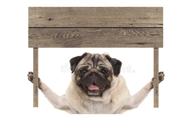 Śliczny uśmiechnięty mopsa szczeniaka pies trzyma up pustego drewnianej deski znaka zdjęcia stock