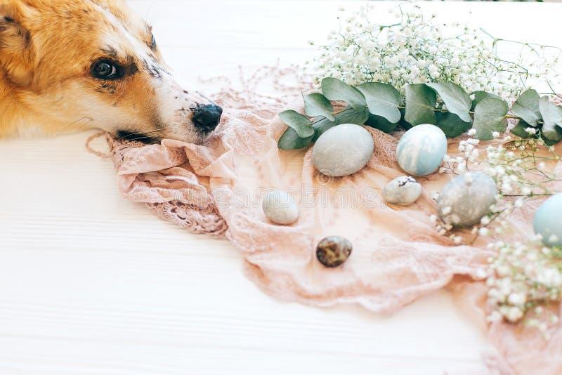 Śliczny złoty psi relaksować przy eleganckimi Easter jajkami, kwiatami na nieociosanym drewnianym tle w świetle i Nowożytni Easte obraz stock