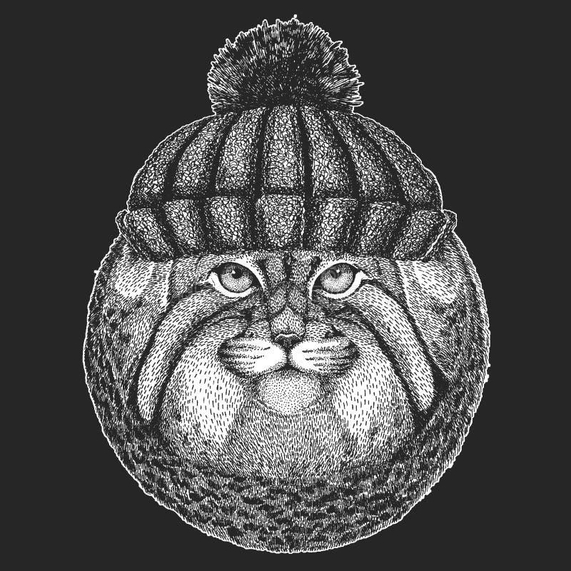 Śliczny zwierzę jest ubranym trykotowa kapeluszowa Dzika ręka rysującego zima kota Manul wizerunek dla tatuażu, emblemat, odznaka royalty ilustracja