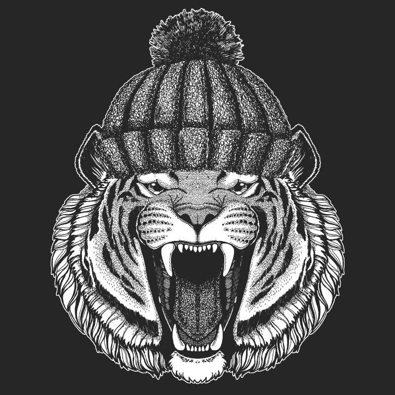 Śliczny zwierzę jest ubranym trykotowa kapeluszowa Dzika tygrysia ręka rysującego zima wizerunek dla tatuażu, emblemat, odznaka,  ilustracji