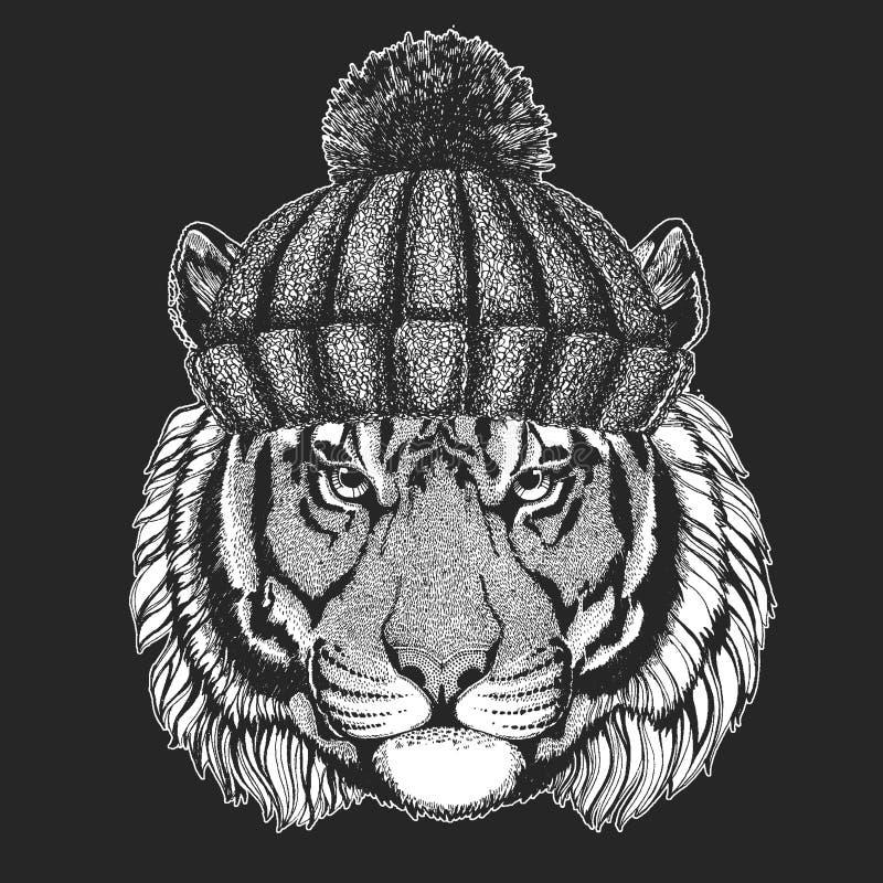 Śliczny zwierzę jest ubranym trykotowa kapeluszowa Dzika tygrysia ręka rysującego zima wizerunek dla tatuażu, emblemat, odznaka,  royalty ilustracja