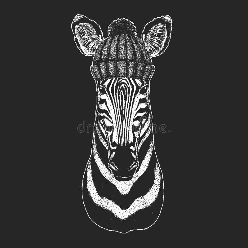 Śliczny zwierzę jest ubranym trykotowa kapeluszowa Końska ręka rysującą zimy zebry ilustrację dla tatuażu, emblemat, odznaka, log ilustracja wektor