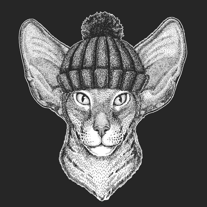 Śliczny zwierzę jest ubranym trykotowej zimy kapeluszowego Orientalnego kota z dużymi ucho Wręcza patroszonego wizerunek dla tatu ilustracji