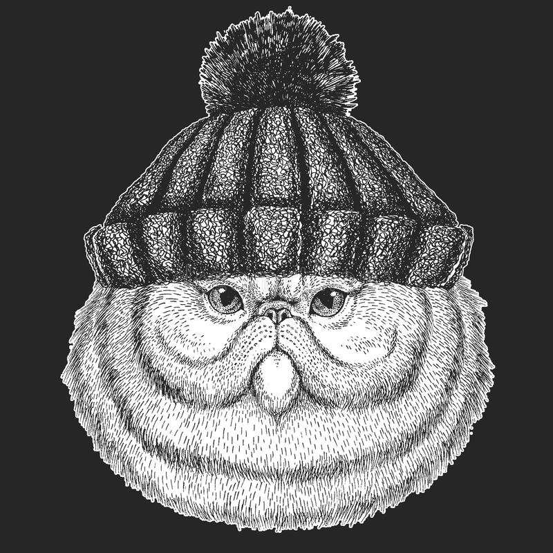 Śliczny zwierzę jest ubranym trykotowej zimy kapeluszowego portret puszysta Śliczna Zamazana ręka rysujący perskiego kota wizerun royalty ilustracja