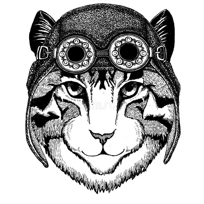 Śliczny zwierzęcy jest ubranym motocykl, lotnika hełma domowego kota ręka rysująca ilustracja dla tatuażu wizerunek, emblemat, od ilustracji
