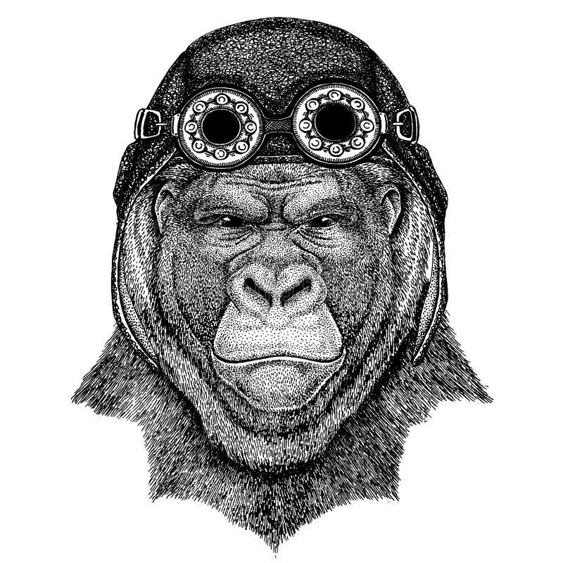 Śliczny zwierzęcy jest ubranym motocykl, lotnika hełma goryl, małpa, małpuje Frightful zwierzęca ręka rysującego wizerunek dla ta royalty ilustracja