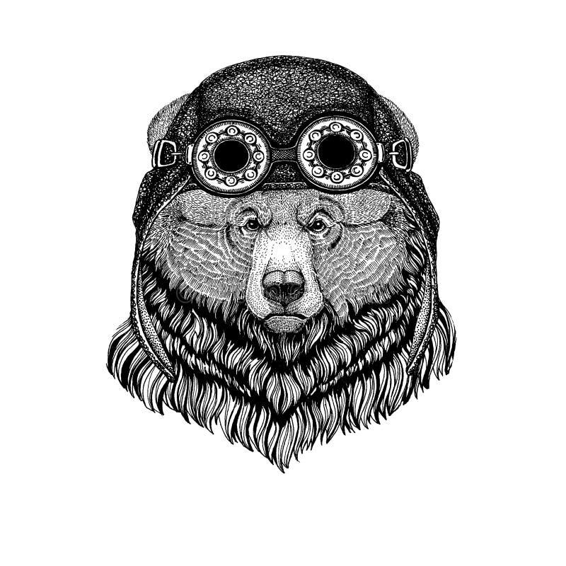 Śliczny zwierzęcy jest ubranym motocykl, lotnika hełma grizzly niedźwiedzia Duża dzika niedźwiadkowa ręka rysujący wizerunek dla  ilustracji