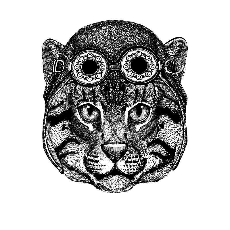 Śliczny zwierzęcy jest ubranym motocykl, lotnika hełma kota połowu kota Dzika ręka rysujący wizerunek dla tatuażu, emblemat, odzn royalty ilustracja