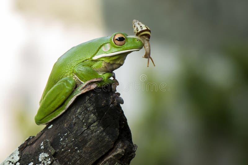 Ślimaczek i żaba obraz royalty free