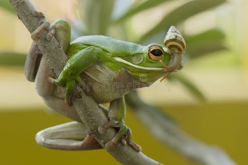 Ślimaczek i żaba zdjęcie stock
