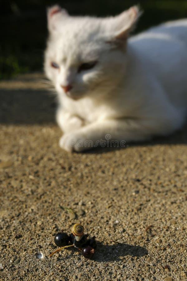 Ślimaczek i biały kot zdjęcia stock