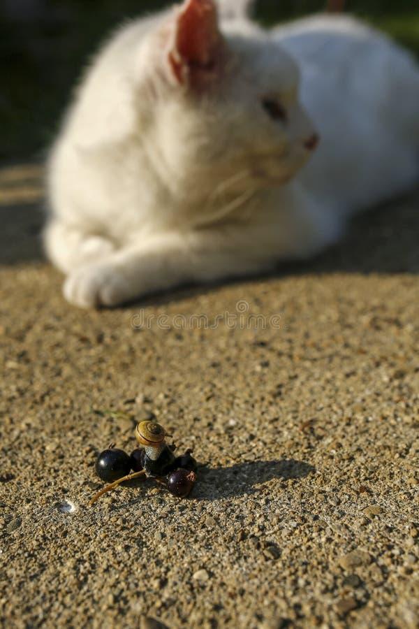 Ślimaczek i biały kot obrazy royalty free