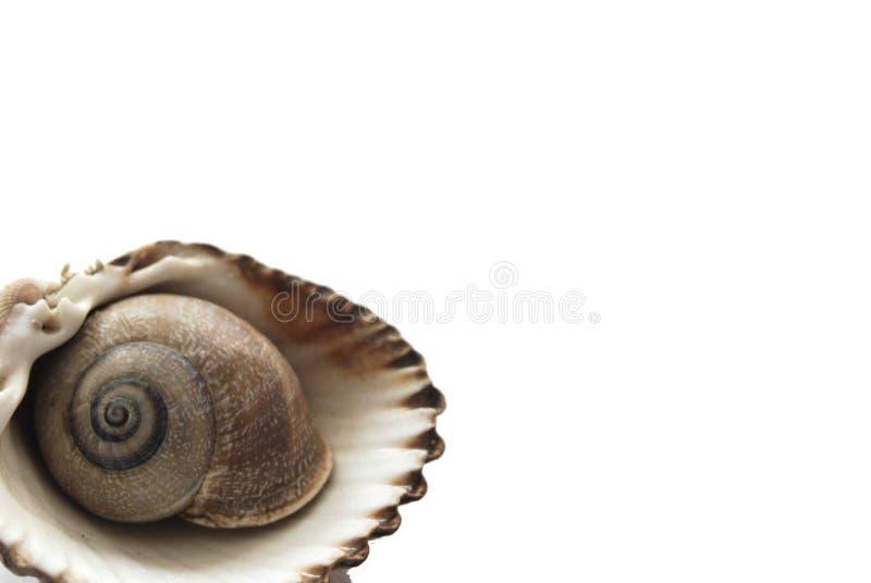 Ślimaczek i skorupa zdjęcia stock