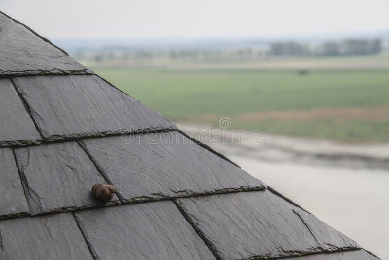Ślimaczek na dachu z łupek płytkami dla tło obrazy royalty free