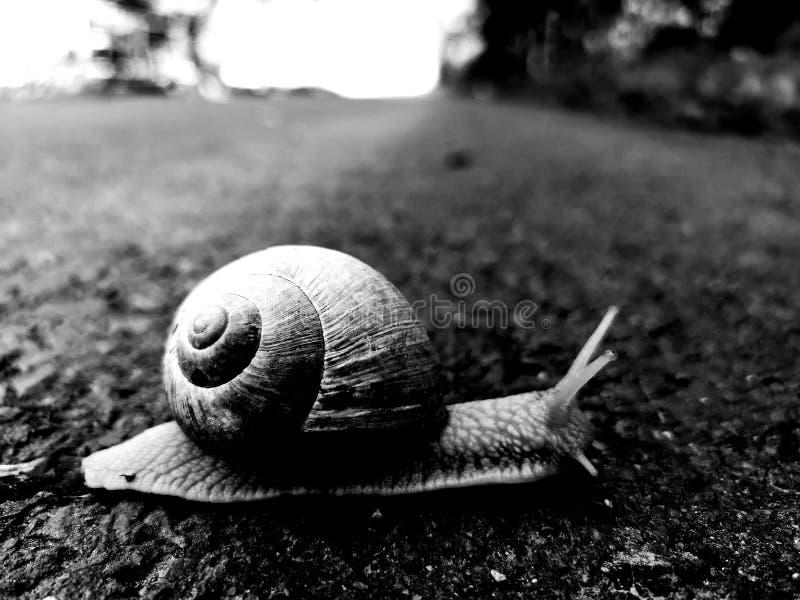 Ślimaczek na drodze wolno rusza się fotografia stock