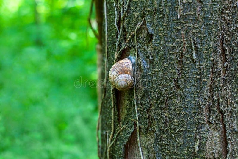 Ślimaczek na drzewie obrazy stock