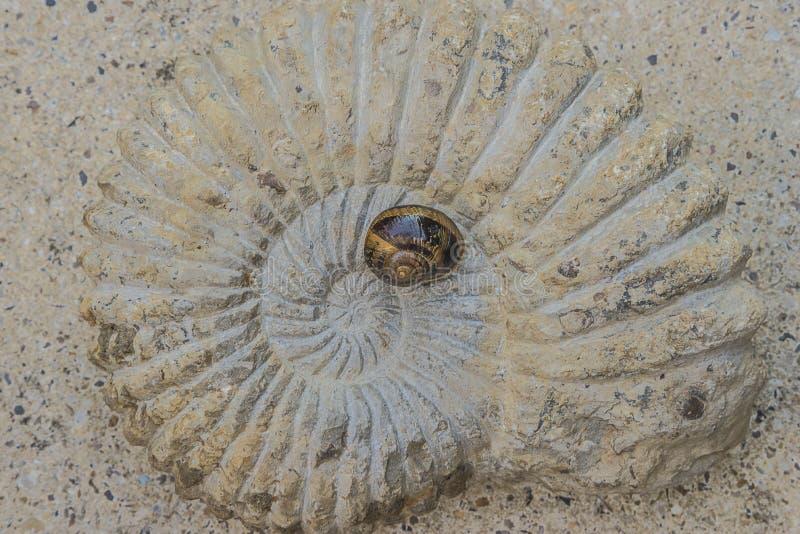 Ślimaczek na dużym skamieniałym odgórnym widoku zdjęcie stock