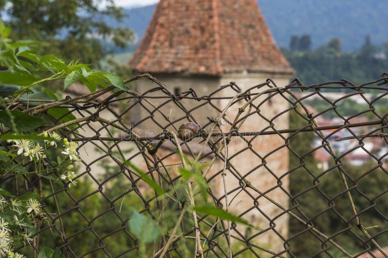 Ślimaczek na ogrodzeniu obrazy royalty free