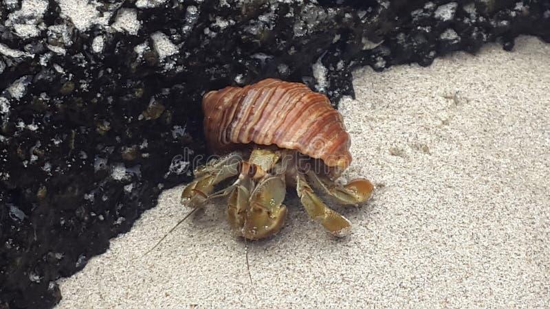 Ślimaczek od Galapagos zdjęcie royalty free