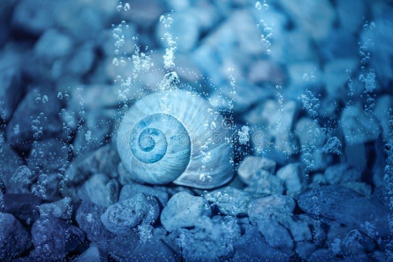 Ślimaczek skorupa pod wodą zdjęcie stock