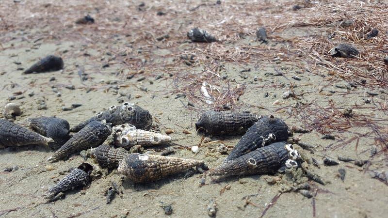 Ślimaczek skorupy morzem zdjęcia royalty free