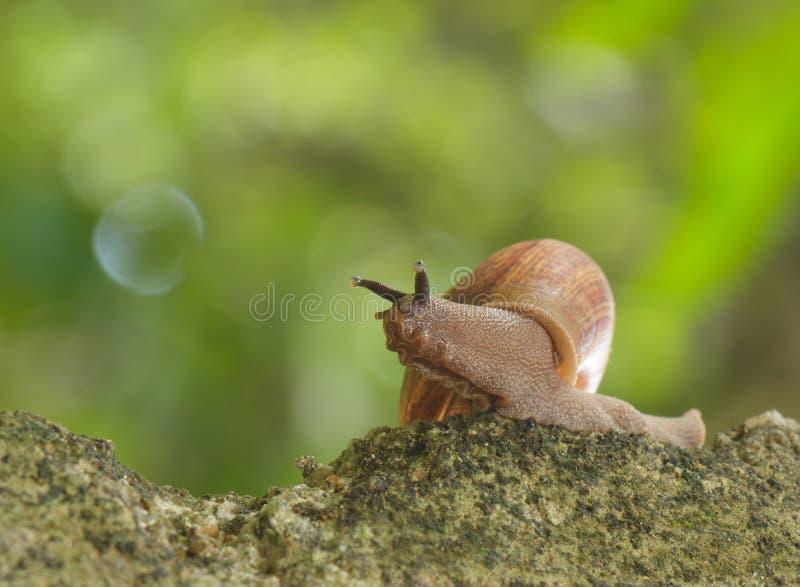 Ślimaczka czołganie obraz stock