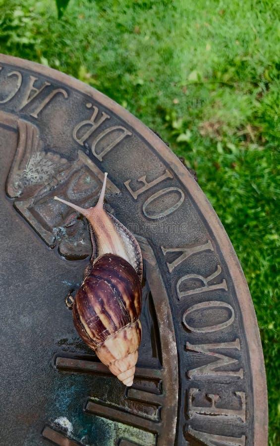 Ślimaczka czołganie krawędź sundial obraz stock