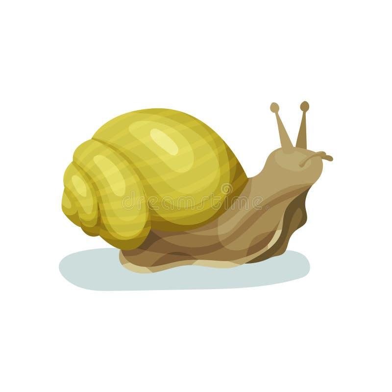 Ślimaczka gastropod mollusk z żółtej skorupy wektorową ilustracją na białym tle ilustracja wektor