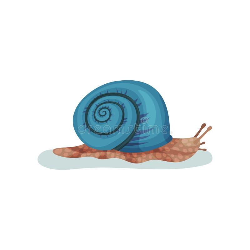 Ślimaczka gastropod mollusk z błękitnej skorupy wektorową ilustracją na białym tle ilustracji