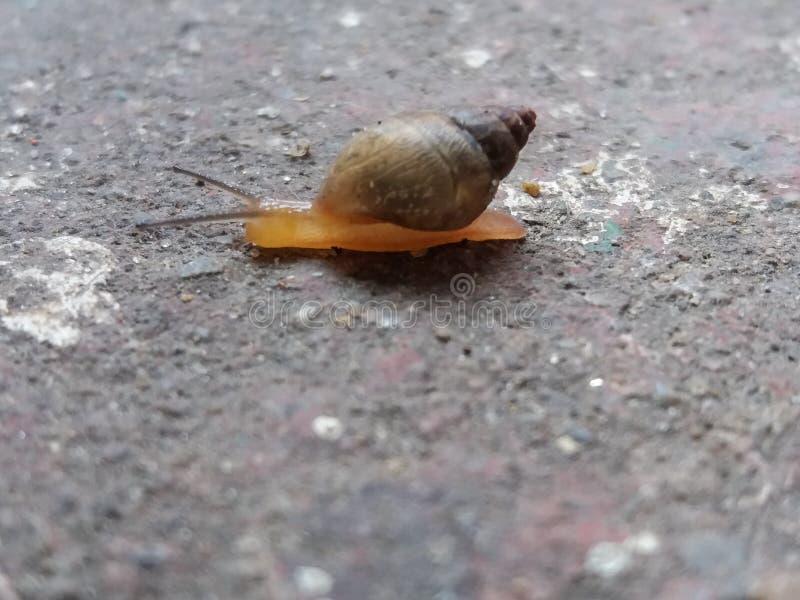 Ślimaczka mały makro- zdjęcie royalty free