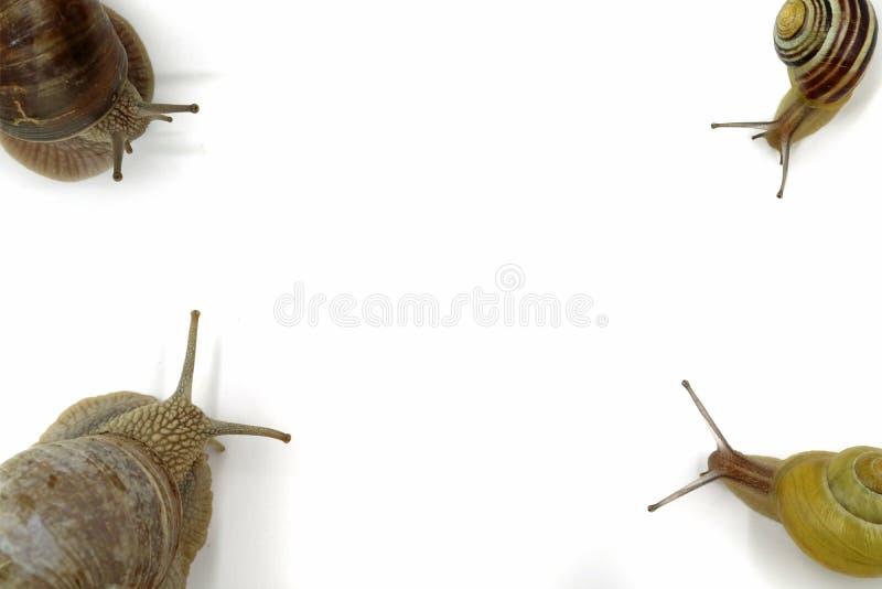 Ślimaczki w each narożnikowym odgórnym widoku odizolowywającym na bielu z kopii przestrzenią obraz royalty free