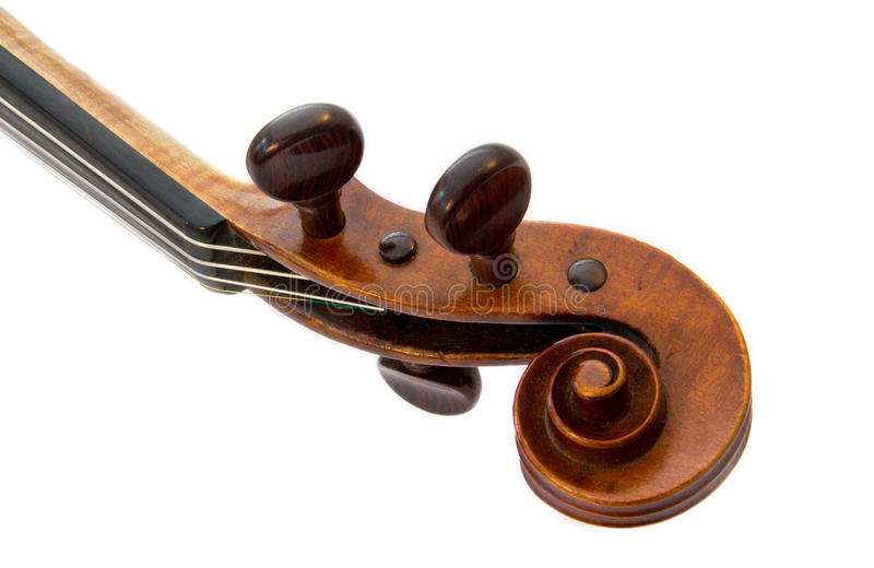 ślimacznica skrzypce zdjęcie stock