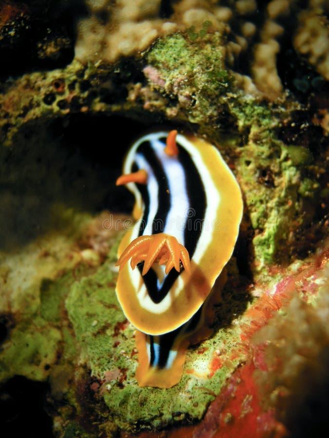 ślimaki morskie obraz royalty free