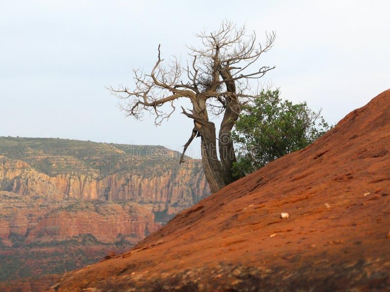 Ślimakowatego vortex drzewo fotografia royalty free