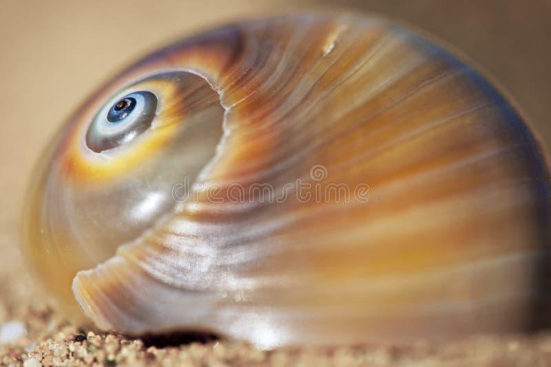 Ślimakowaty Seashell obrazy royalty free