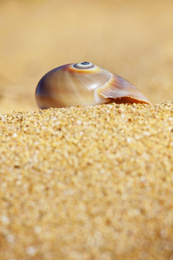 Ślimakowaty Seashell zdjęcie stock