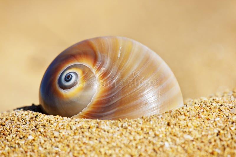 Ślimakowaty Seashell obrazy stock