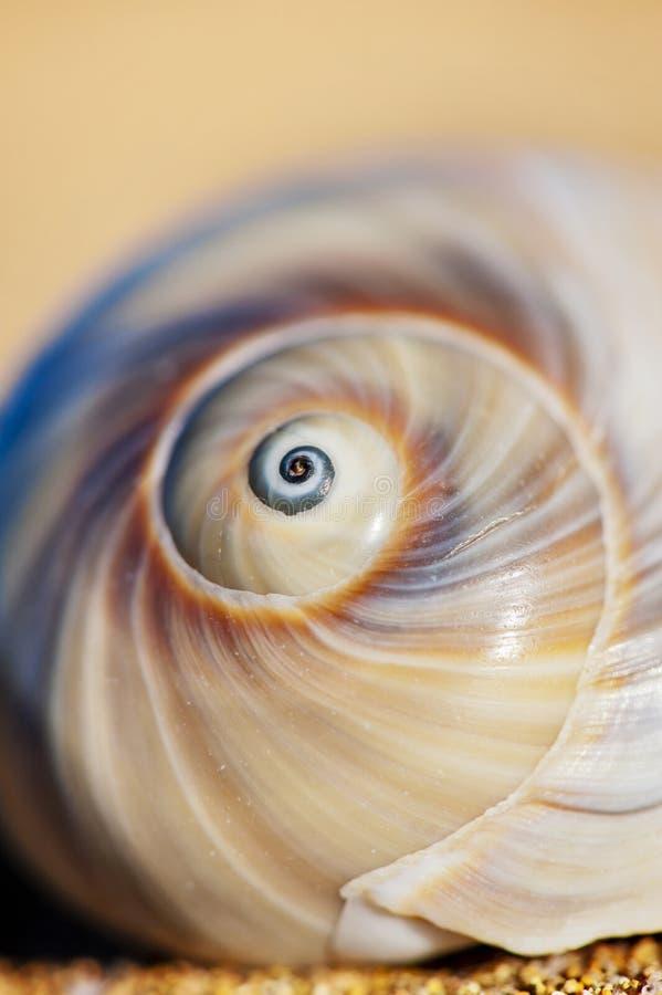 Ślimakowaty Seashell zdjęcie royalty free