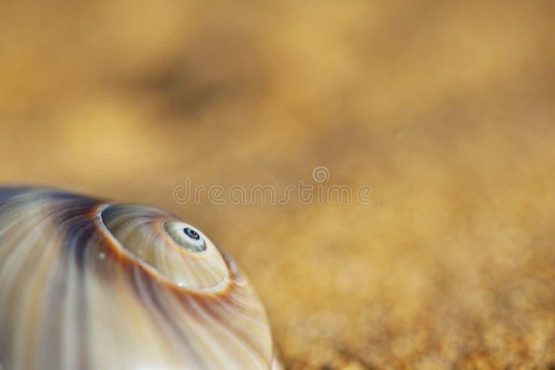 Ślimakowaty Seashell fotografia stock
