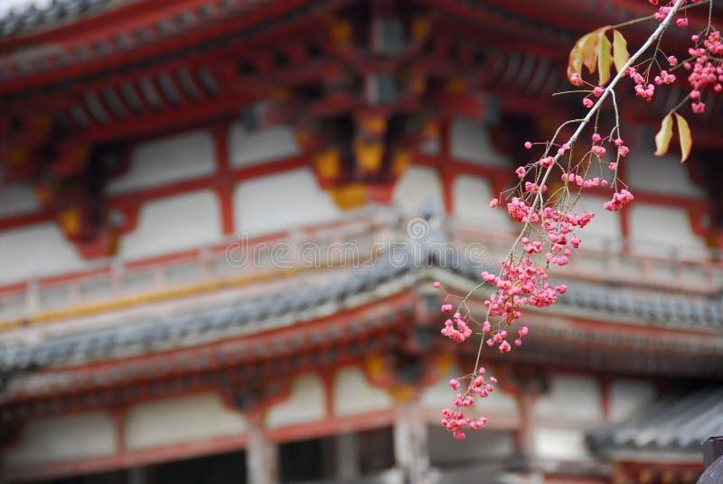 Śliwkowa okwitnięcie świątynia obrazy stock