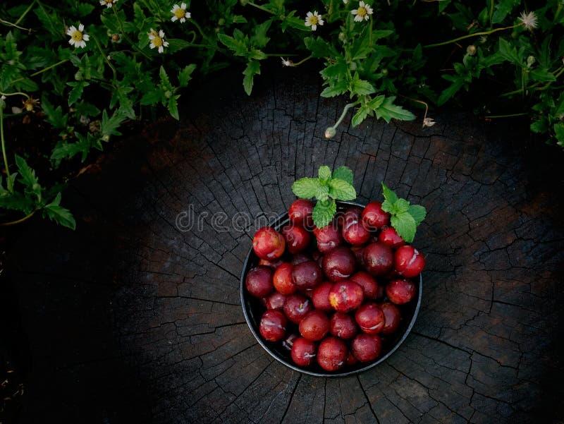 Śliwkowy Li owoc jest jednakowa Czerwoni zakazu Luang gatunki Ale rezultat będzie mały obraz stock