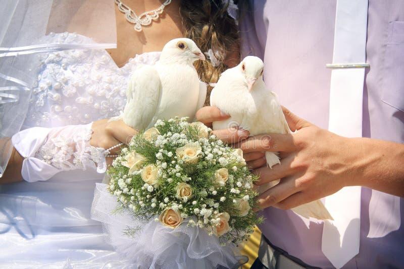 Ślubne gołąbki obraz royalty free