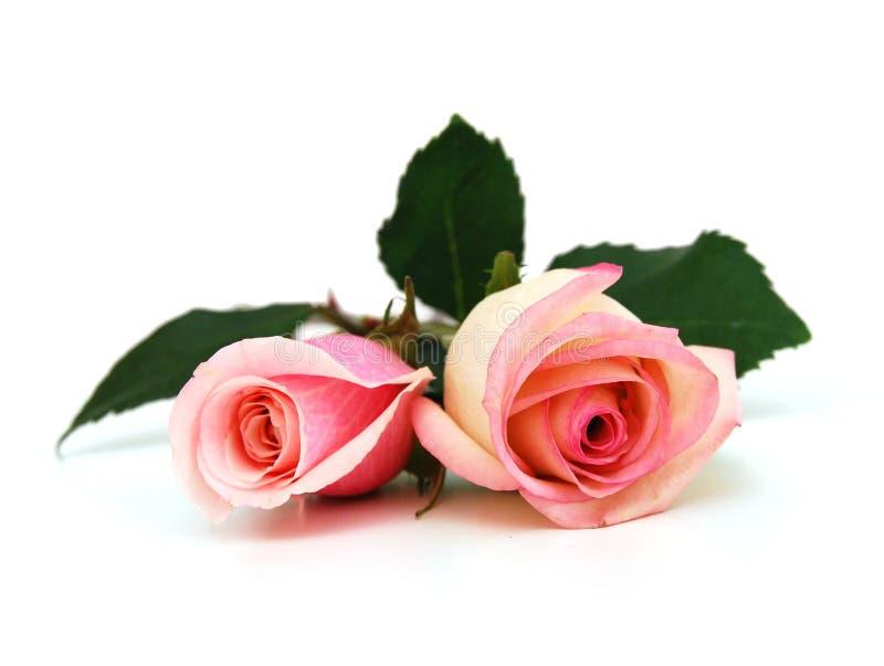 Ślubne różowe róże obrazy stock