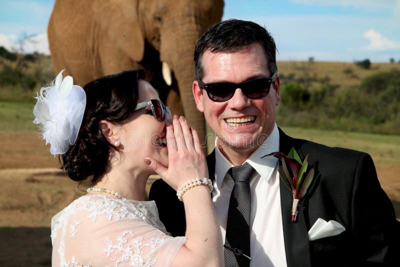 Ślubnej pary i Afrykańskiego słonia krótkopęd zdjęcia royalty free